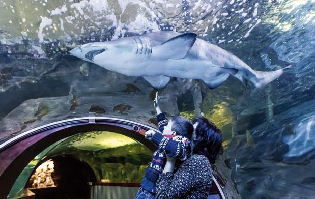 Men en la parte vieja con entradas para el aquarium por for Precio entrada aquarium