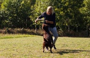 Bono 10 clases grupales de educación canina