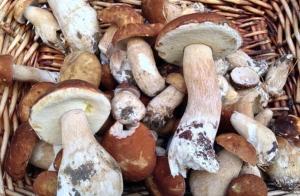 1kg de hongos frescos