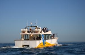Paseos en catamarán por la bahía de Txingudi y el Faro de Higuer
